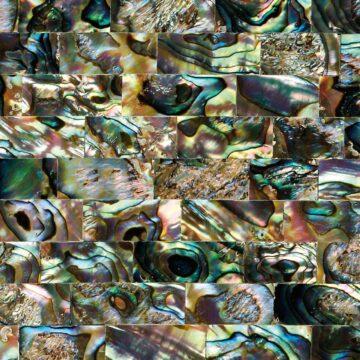 Green Abalone (Large Brick) Muschel gruen blau multicolor